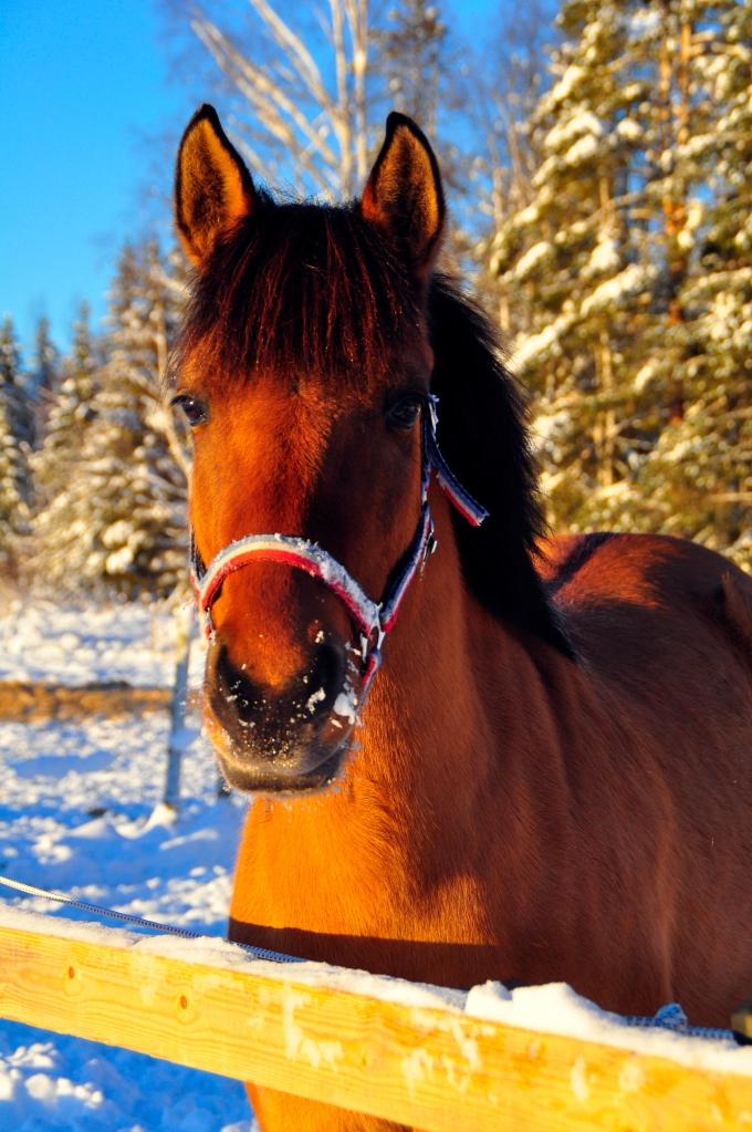 Nykomling Copyright © 2015 Evalena Karlsson
